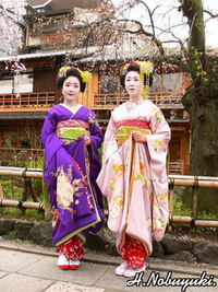 祇園白川京舞妓