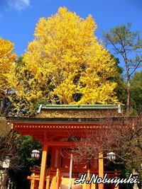 京都の秋を振り返る2