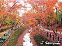 散紅葉もまた美しきかな