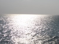海ぶどう復活