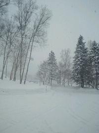 道路が埋まるぐらいに雪が積もるって凄いなぁ