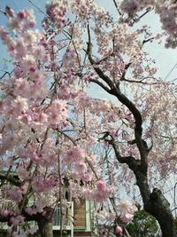 春爛漫2011