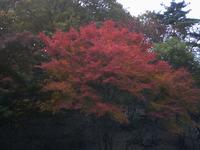 宝ヶ池の紅葉