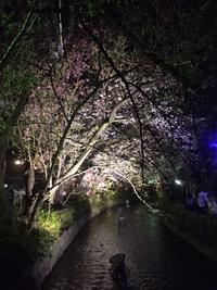 桜!桜(^^)