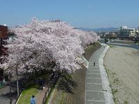 京都鴨川遊歩道、早歩きウォーキングの ススメ!