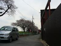 京都の介護タクシー!桜開花情報。