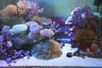 900サンゴ水槽の経過