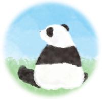 パンダの肩甲骨(笑)