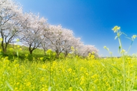 「生駒にある桜のきれいな場所」