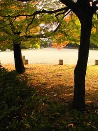 京都御苑も紅葉の季節到来・・・2007.11.15