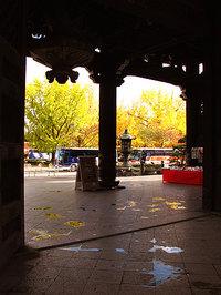 東本願寺の銀杏も秋真っ盛り!