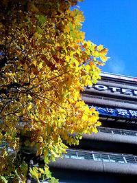 京都駅前の街路樹