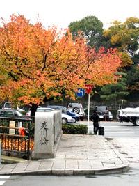 雨のち紅葉~堀川通 2010/11/22 19:52:27