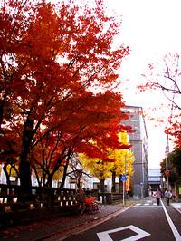 下京区正面通東中筋東入の紅葉